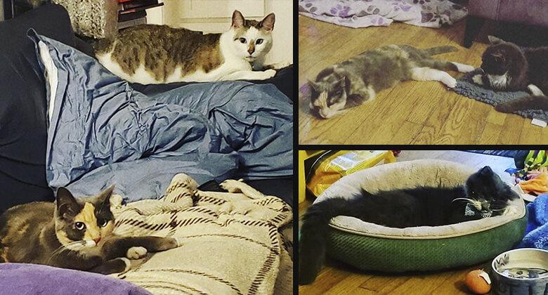 Tony Todd é fã de gatos, veja foto dos gatos de Tony Todd